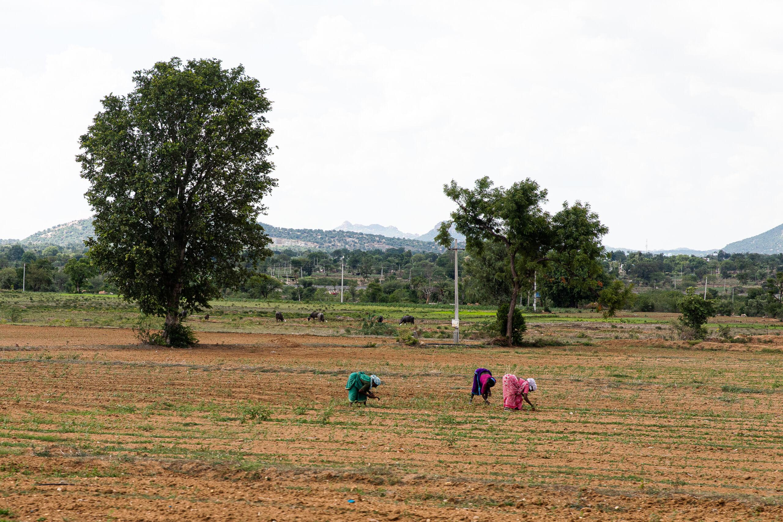 women work in a large field
